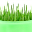 Close-up of green oat grass — Stock Photo