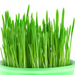 Stock Photo: Close-up of green oat grass