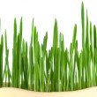 Close-up of green oat grass — Foto de Stock