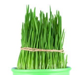 Green grass in a pot — Stock Photo