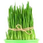 Green grass in a pot — Stock Photo