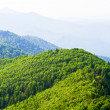 Green mountain view — Stock Photo