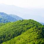 Green mountain view — Stock Photo #3425935