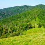 Green mountain view — Stock Photo #3425986