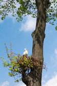 Stork in the nest — Stock Photo