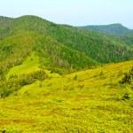 Green mountain view — Stock Photo #3439967