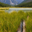 Summer view of mountains and lake in Altay, Russia — Stock Photo