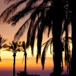 View of palm in front of sunset — Stock Photo