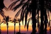 View of palm in front of sunset — Stockfoto