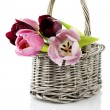 Tulips in a wooden basket — Stock Photo
