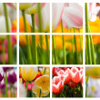 Beautiful tulips collage — Stock Photo