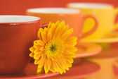 Color caps and gerbera — Stock Photo