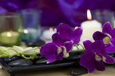Beautiful purple orchids — Stock Photo