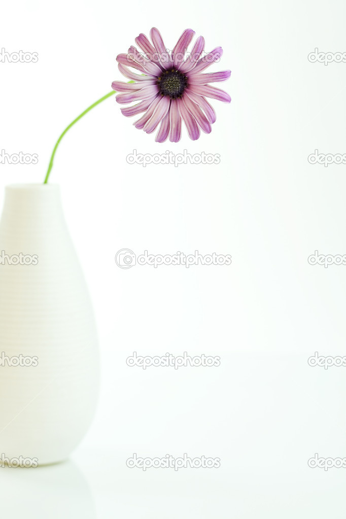 Pink Daisy in a white vase on white background — Stock Photo #3176589