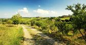 Tuscan landscape — Stock Photo