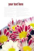 чаша воды и цветы спа концепции — Стоковое фото