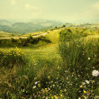 Alpine meadow — Stock Photo #3632498