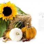 Pumpkins and sunflower — Stock Photo #3903766