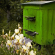 Beehive - Stockfoto