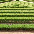 Green cuted bushes (triangular shape) — Stock Photo