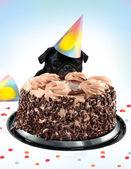 Pug birthday cake — Stock Photo