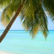 Stock Photo: Tropical Caribbebeach