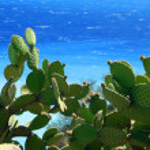 Cactus and sea — Stock Photo