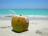 Caribbean beach coconut — Stock Photo