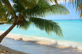 Shady palm — Stock Photo