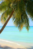 Tropical Caribbean beach — Stock Photo