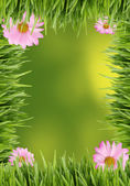 Grass and daisy background — Stock Photo