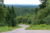 Trees and winding road — Stock Photo