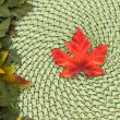 Maple leaf and wicker fall background - ストック写真