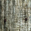 Abstract texture an old dry cracked wood — Stock Photo