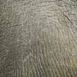 Abstract texture from elephant skin — Stock Photo #2883386