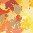 Autumn leaves background — Stock Photo #3515088