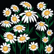 Daisies — Stock Photo #3515095