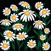 Marguerites — Photo
