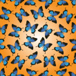 Butterflies seamless vector design — Stock Vector