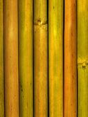 Bamboo stalks — Stock Photo