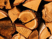 Fire wood, tree oak — Stock Photo