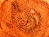 Textures tree — Stock Photo