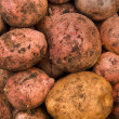 Potato tubers — Stock Photo #2815579