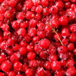 Berries currant frozen red — Stock Photo