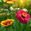 Flowers red yellow petals — Stock Photo #2982483