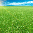 Wheaten   field — Stock Photo #3008517