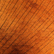 Textures  tree  oak - Stock Photo