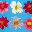 Flowers decorative collection — Stock Photo #3157976