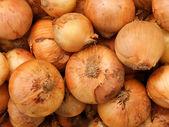 Vegetables onions — Stock Photo