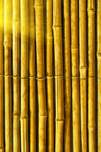 Bamboo abstract background — Stock fotografie
